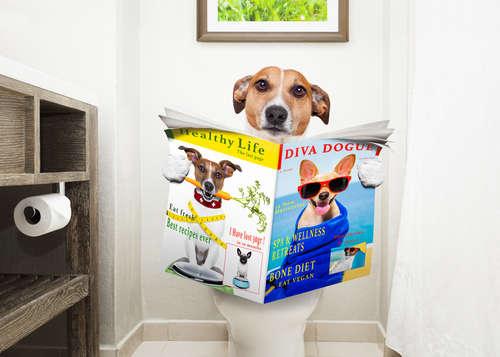 【獣医師監修】犬の便秘|考えられる原因や症状、治療法と予防法について