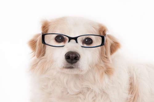 犬の白内障|考えられる原因や症状、治療法と予防法について