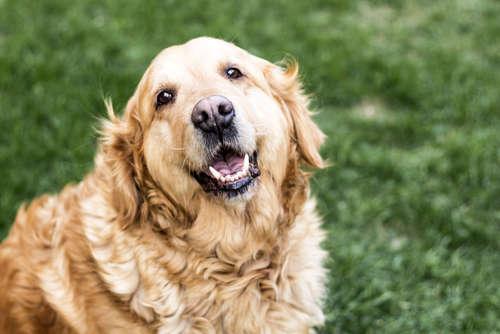 【獣医師監修】犬の糖尿病|考えられる原因や症状、治療法と予防法について