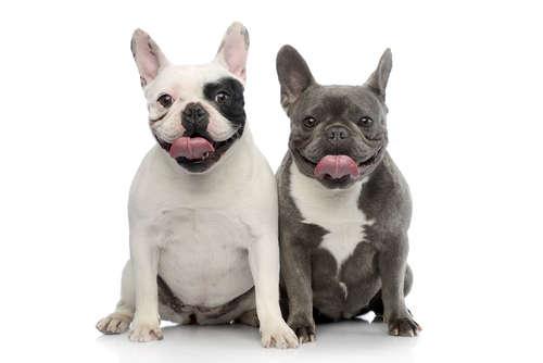 【獣医師監修】犬が舐めてくる理由と、その心理