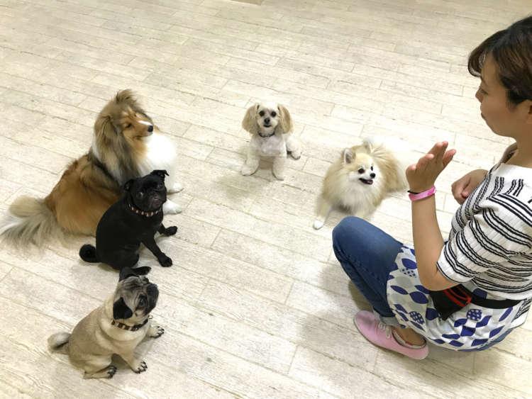 【花梅トライ! トライ!!】犬の保育園で「社会性」とアレ!? を身につける! 《通園編》