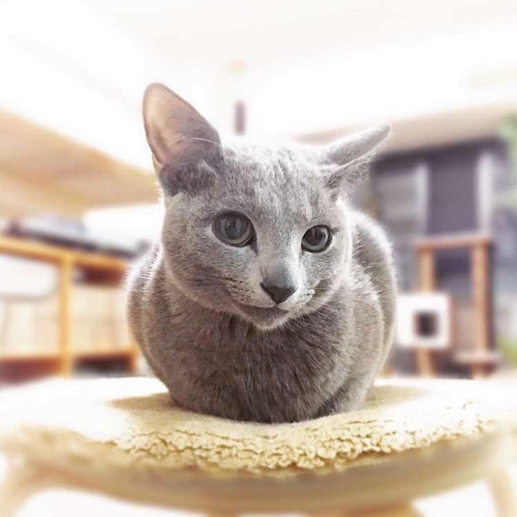 【口角キュッ♡】にっこり微笑んでいるような表情を見せてくれるネコちゃんに、心奪われる(〃∇〃)