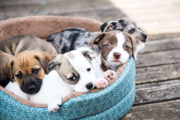 【獣医師監修】犬を飼う際の心構え…ぜひ知っておいてほしいこと