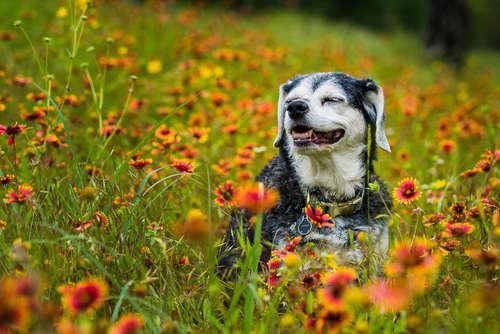 犬の認知症|考えられる原因や症状、治療法と予防法について