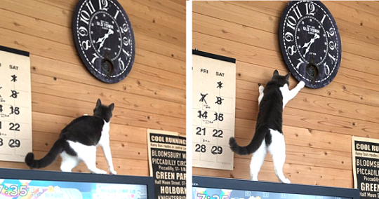 【かわいすぎる犯人♡】時計の時刻がすぐズレる → たった今、原因がわかりました(4枚)