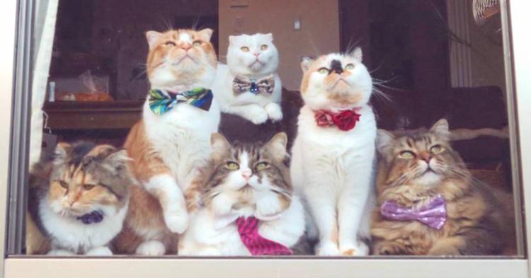 【お外が気になるニャ〜】大集合して窓の外を眺める7匹の猫たち。一緒に黄昏れたくなる写真集♡