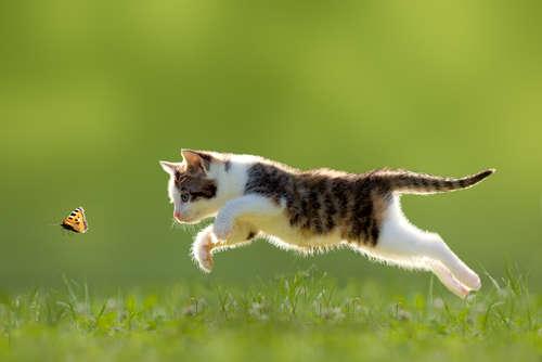 猫の驚異的なジャンプ力! 身体能力の秘密について