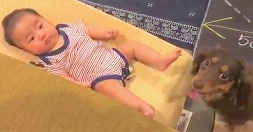 【アタシに任せて!】赤ちゃんをあやすのを手伝ってくれるワンコさん♪ その様子にほっこり(*´ω`)