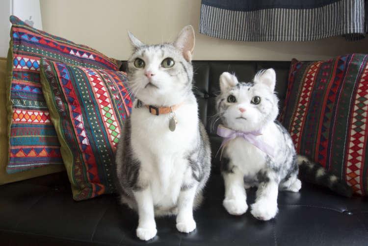 思わず一緒に写真を取りたくなる! PECO Hug(ペコハグ)のぬいぐるみと猫ちゃんの2ショット♪
