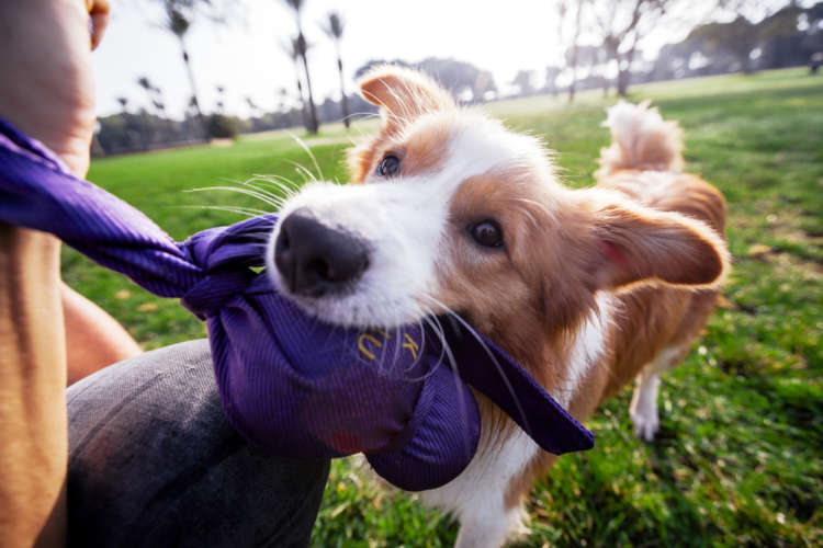 犬が噛む! 噛む理由とその対策について