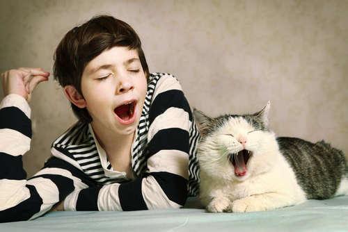 猫があくびをする理由とその心理について