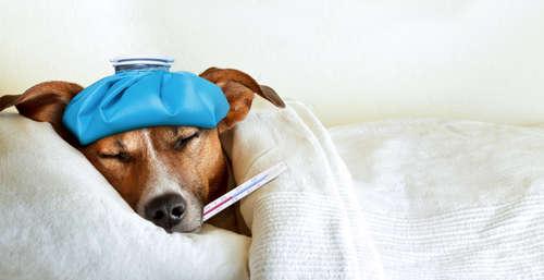 犬の風邪|考えられる原因や症状、治療法と予防法