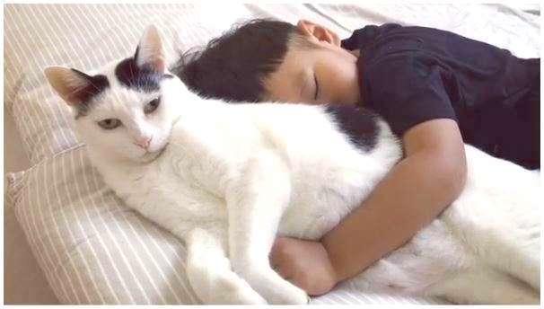 お昼寝中、弟に抱きつかれてしまった先輩ネコ。この後とった行動が、とっても優しかった…(*´ω`)♡