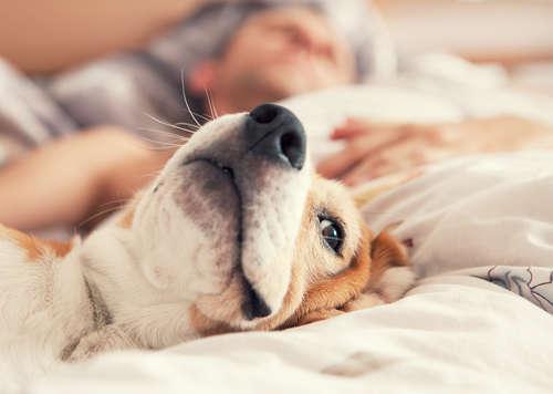 【獣医師監修】犬アレルギー 考えられる原因や症状、治療法と予防法