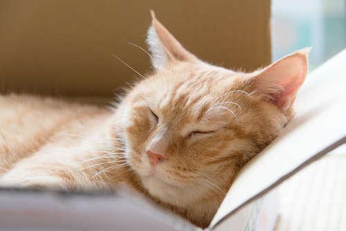 猫が箱好きなのはどうして? 箱に入りたがる理由とおすすめの箱