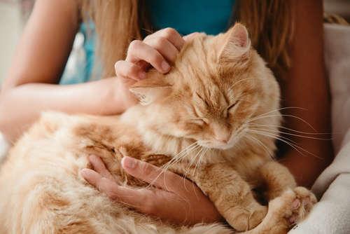 撫でようとすると逃げられる。猫の正しい撫で方と慣らし方