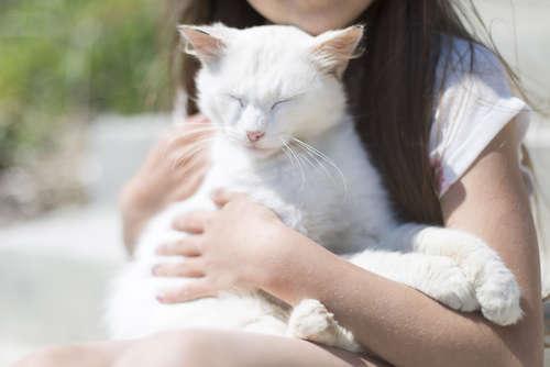 猫が甘える理由と、その心理について