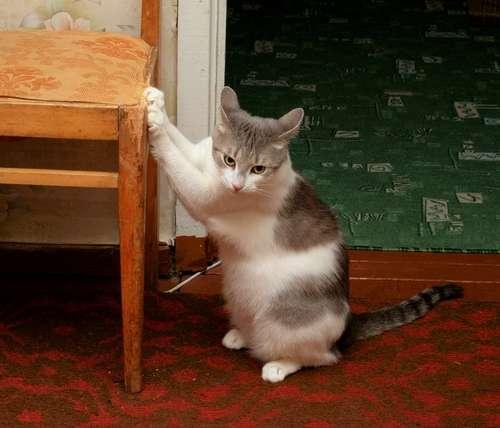 猫が爪とぎをする理由と対策、便利グッズについて
