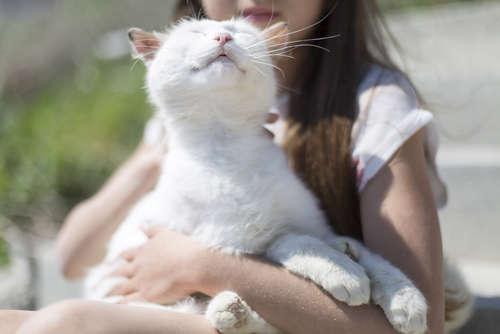 【獣医師監修】猫が喉をゴロゴロ鳴らす理由と、その心理について