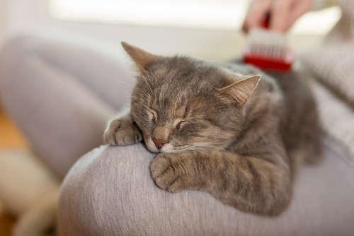 """猫が""""もみもみ""""""""ふみふみ""""してくるのはどうして? 理由と、その心理について"""