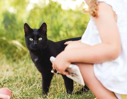 猫が後をついてくるのはどうして? 理由と心理について
