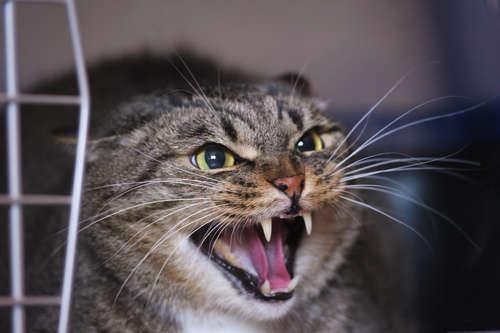 猫が威嚇をする理由とその心理について