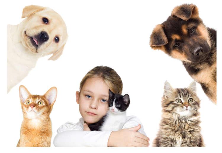 「知らなかった…」じゃ許されない! ペットに関わる法律たち