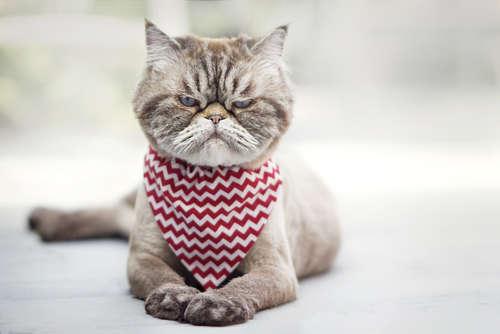 猫が怒った時にとる行動とその対策