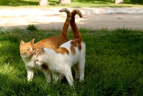 猫が頭突きをしてくる! 頭突きの理由とその心理について