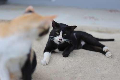 猫の喧嘩を止めさせたい! 喧嘩をする理由と対策