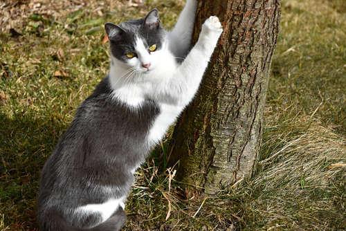 猫の爪切りって必要? 爪切りの頻度とやり方