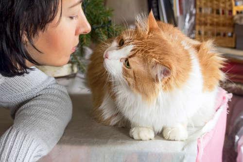 猫の口臭事情。ニオイの原因や考えられる病気、治療法、予防法について