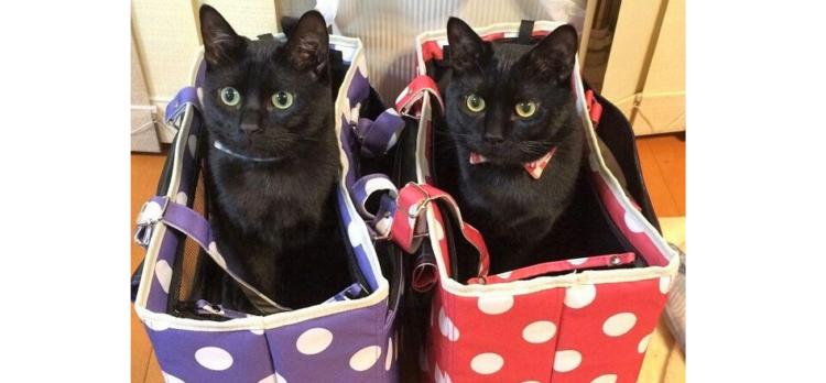 【どんな時も一緒だニャ♡】元保護猫の黒ネコ兄弟。幸せいっぱいな日常に、心温まる写真集(11枚)