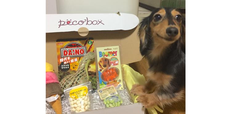 【PECOBOX10月号 受付開始!】今回のテーマは「ハッピー・ハロウィン♪」