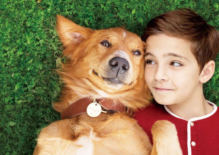 映画『僕のワンダフル・ライフ』―ペットへの愛情・絆をもっと深めてみませんか?