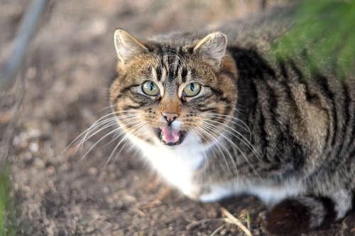 猫の鳴き声がうるさい時はどうすればいい? 猫が鳴く理由と対策について