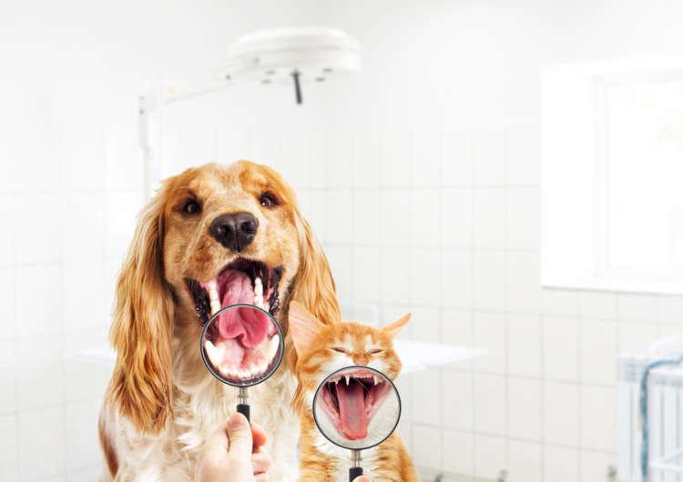 健康で丈夫な歯を一生キープしたい!  デンタルケアに関する<Q&A>30連発