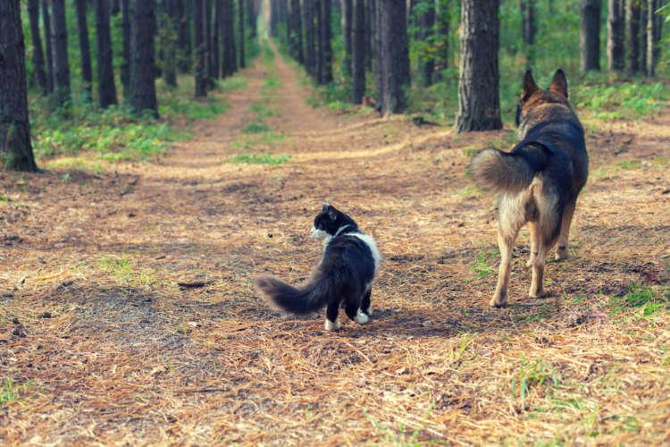 「うちの子に限って…」がいちばん危険!? ペットの迷子予防と、迷子になってしまった時の対応とは?