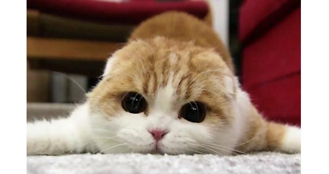 【絶対捕まえるニャ】おもちゃを狙ってモゾモゾ動く猫! まるでアザラシのような仕草が…(゚д゚)!