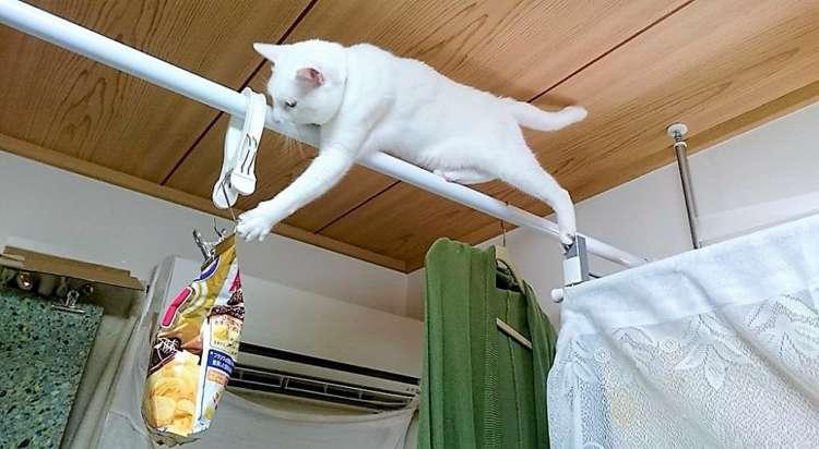 お菓子の袋が大好きなネコ。どんな場所だろうと、Getしようとする執念が凄まじかった…!(4枚)
