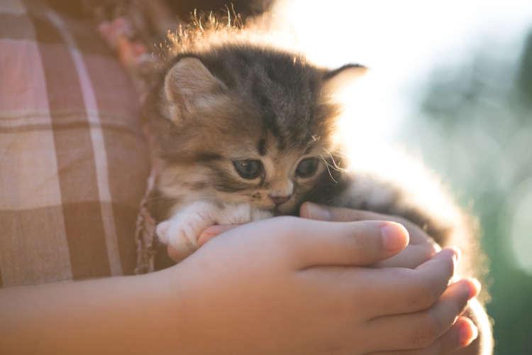 猫の里親募集。応募する際の注意点や、里親を探す方法
