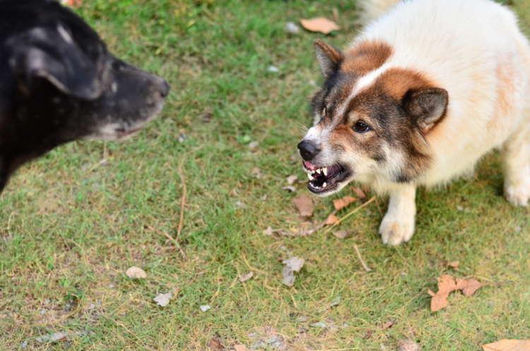 犬が唸る! 唸る理由とその対策について