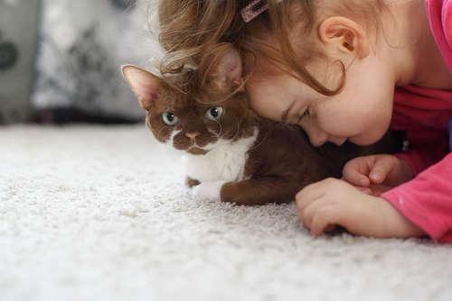 【獣医師監修】猫の糖尿病|考えられる原因や症状、治療法と予防法