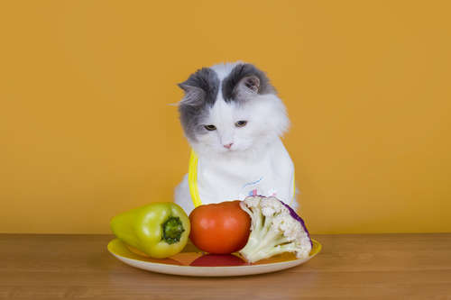 【獣医師監修】猫のダイエット、その方法や注意点について