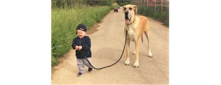 【やさしいお散歩♡】男の子に合わせて歩くワンコ。その温かい光景に、胸がほっこり(。・_・。)♡