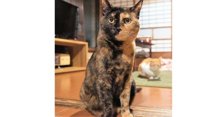 【2色の顔を持つ猫♪】お顔の毛色がクッキリ2色に分かれたニャンコ! その日常を覗いてみた…|д゚)♡