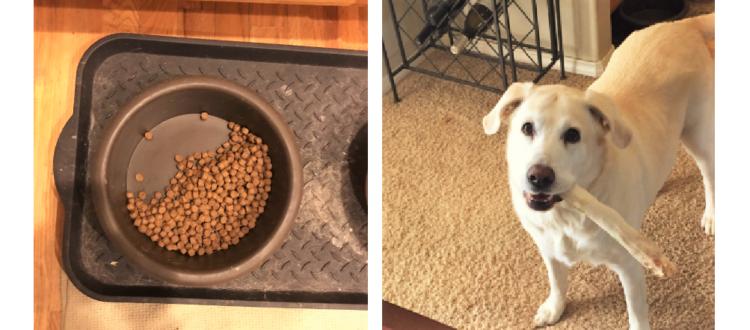 【いつでも食べていいよ…】亡くなった先住犬のためにゴハンを残す愛犬。その理由に、胸が熱くなる。