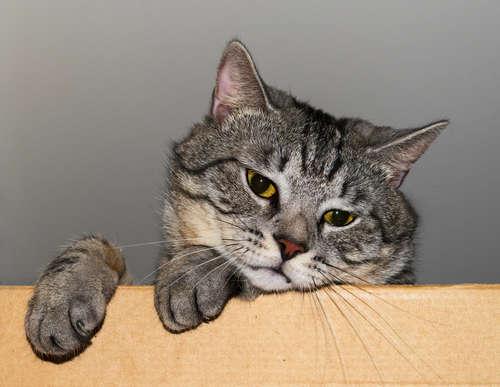 猫の便秘 考えられる原因や症状、治療法と予防法のすべて