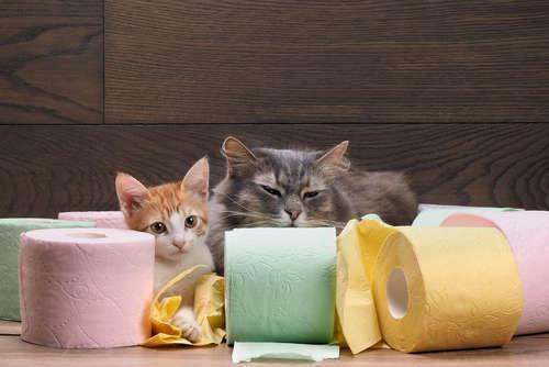 猫の下痢が止まらない。原因や考えられる病気、治療法、予防法について