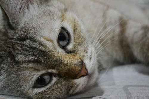 猫の目やにと病気の関係。考えられる原因や治療法、予防法について